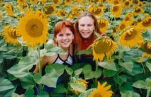 sunflower 8