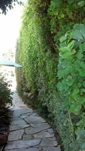 Francesca's Garden Hedge