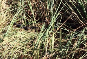 See If You Can Find The Baby Alligators In This Photo Everglades